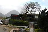 20130202陽明山櫻花:DSCN1963.JPG