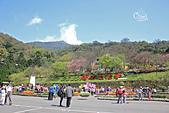20130228陽明山櫻花:IMG_9612.JPG