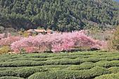 20130217武陵農場:IMG_9200.JPG