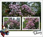 20100328-0329阿里山賞櫻:IMG_6950.JPG