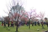 20130214中正紀念堂櫻花:IMG_8330.JPG