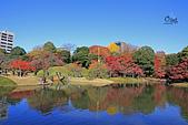 20171124-1128日本東京銀杏:IMG_0417.JPG