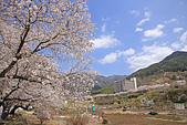 20180330-0410韓國賞櫻(上):IMG_2758.JPG