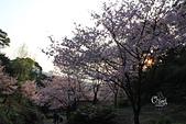 20130309陽明山北投三芝櫻花:IMG_1038.JPG