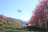 20130217武陵農場:IMG_9204.JPG