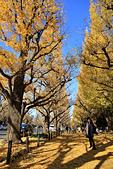 20161201-1206日本東京銀杏+河口湖富士山:IMG_7214.JPG