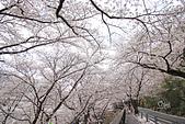 20180330-0410韓國賞櫻(上):IMG_2881.JPG