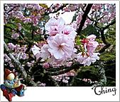20100328-0329阿里山賞櫻:IMG_6988.JPG