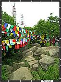 20100422土城三峽桐花:IMG_7427.JPG