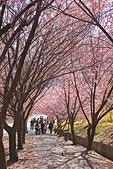 20130217武陵農場:IMG_9344.JPG