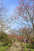 20130202陽明山櫻花:IMG_7943.JPG