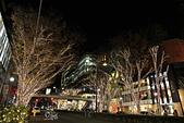 20161201-1206日本東京銀杏+河口湖富士山:IMG_7472.JPG