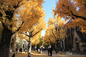 20161201-1206日本東京銀杏+河口湖富士山:IMG_7763.JPG