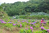 20130526竹子湖繡球花:IMG_1911.JPG