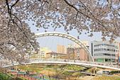 20180330-0410韓國賞櫻(下):IMG_3944.JPG