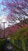 20130202陽明山櫻花:DSC_0398.jpg