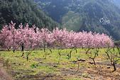 20130217武陵農場:IMG_8683.JPG