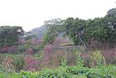 20130202陽明山櫻花:IMG_8036.JPG