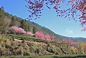 20130217武陵農場:IMG_9210.JPG