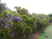 20140406紫藤咖啡園:DSCN8225.JPG