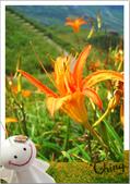 20090913-0915花蓮金針花之行 :IMG_8183.JPG