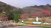 20130202陽明山櫻花:DSC_0413.jpg