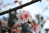 20130214中正紀念堂櫻花:IMG_8388.JPG