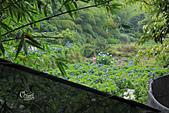 20130526竹子湖繡球花:IMG_1919.JPG