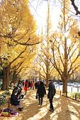 20161201-1206日本東京銀杏+河口湖富士山:IMG_7243.JPG