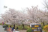20180330-0410韓國賞櫻(下):IMG_2941.JPG