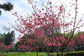 20130214中正紀念堂櫻花:IMG_8116.JPG