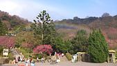 20130202陽明山櫻花:DSC_0417.jpg