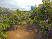 20140406紫藤咖啡園:DSCN8091.JPG