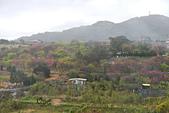 20130202陽明山櫻花:DSCN1915.JPG