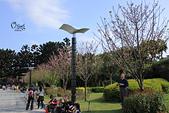 20130224中正紀念堂櫻花:IMG_9473.JPG