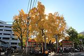 20161201-1206日本東京銀杏+河口湖富士山:IMG_7134.JPG