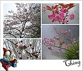 20100328-0329阿里山賞櫻:IMG_6015.JPG