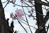 20130214中正紀念堂櫻花:IMG_8129.JPG