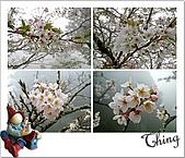 20100328-0329阿里山賞櫻:IMG_6026.JPG