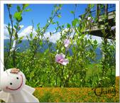 20090913-0915花蓮金針花之行 :IMG_8271.JPG