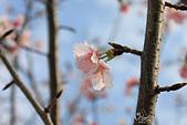 20130214中正紀念堂櫻花:IMG_8135.JPG