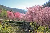 20130217武陵農場:IMG_9220.JPG