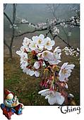 20100328-0329阿里山賞櫻:IMG_6112.JPG