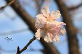 20130214中正紀念堂櫻花:IMG_8402.JPG