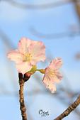 20130214中正紀念堂櫻花:IMG_8404.JPG