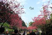 20130214中正紀念堂櫻花:IMG_8145.JPG