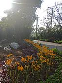 20141012楓樹湖金花石蒜:DSCN0274.JPG