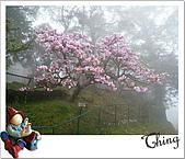 20100328-0329阿里山賞櫻:IMG_6215.JPG