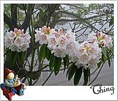 20100328-0329阿里山賞櫻:IMG_6222.JPG