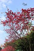 20130214中正紀念堂櫻花:IMG_8151.JPG